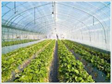 nurseries_agribusiness